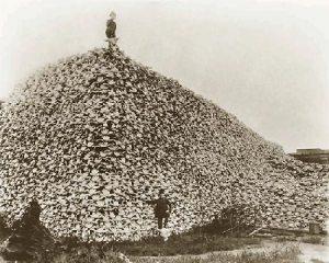 bisonskullpilesm