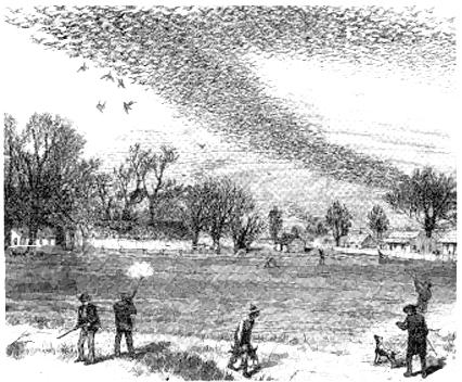 passenger_pigeon_hunting